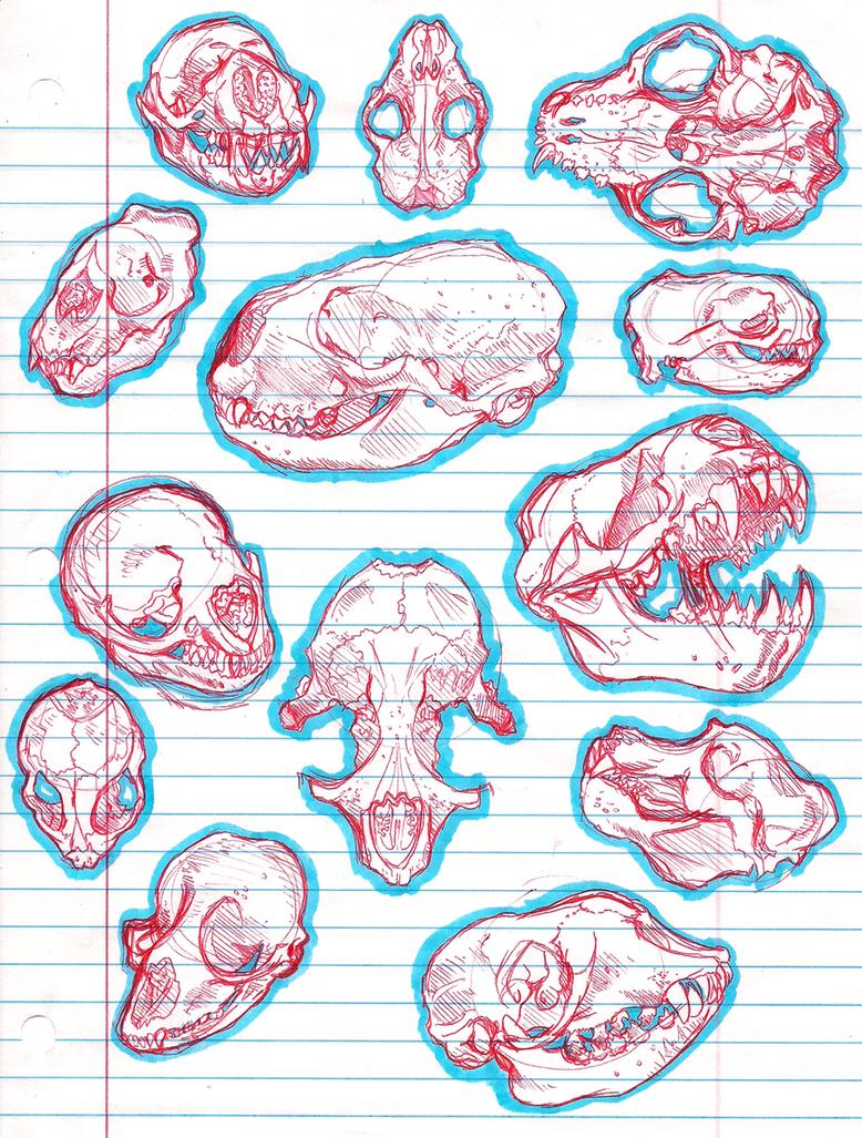 skeletal pinnipeds by SaraaLuna