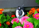 Boomer in the flowers