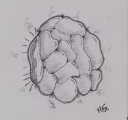 brain eye by Masojiro