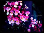 Flower of Boquete II