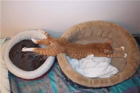 Funny Cat by giddyup-irishlassie