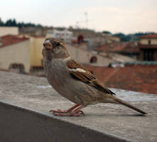 Little Bird by TheSpottedfur