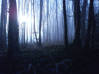 Misty Woodland by lawrencegillies