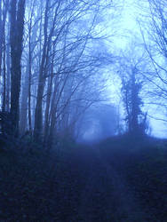 Misty Woodland Path 2 by lawrencegillies