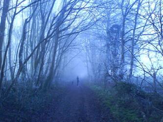 Misty Woodland Path 3 by lawrencegillies