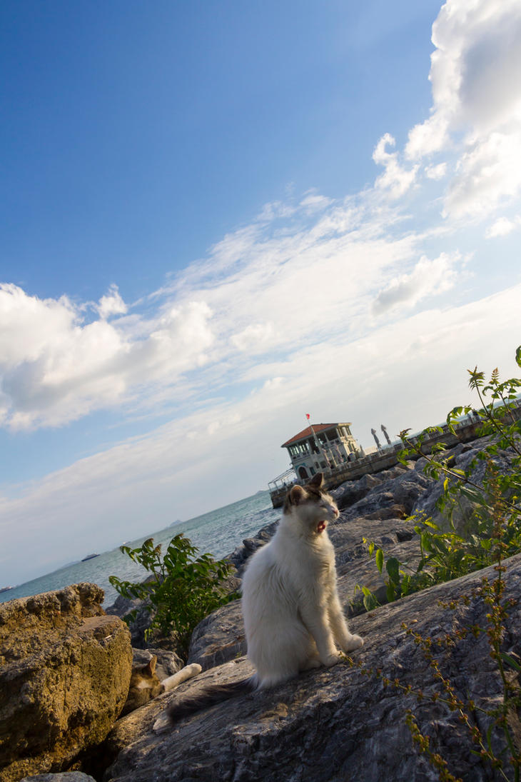 A tired Cat on Rocks... by AneiKhaar