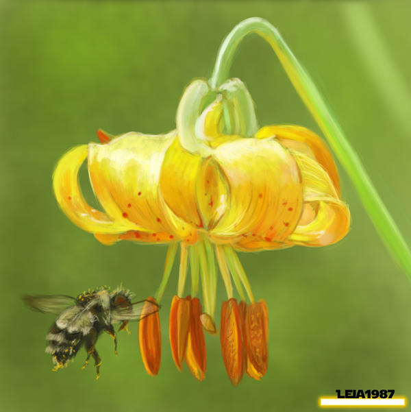 [Image: speedpainting_yellow_flower_by_leia1987-d5go40o.jpg]
