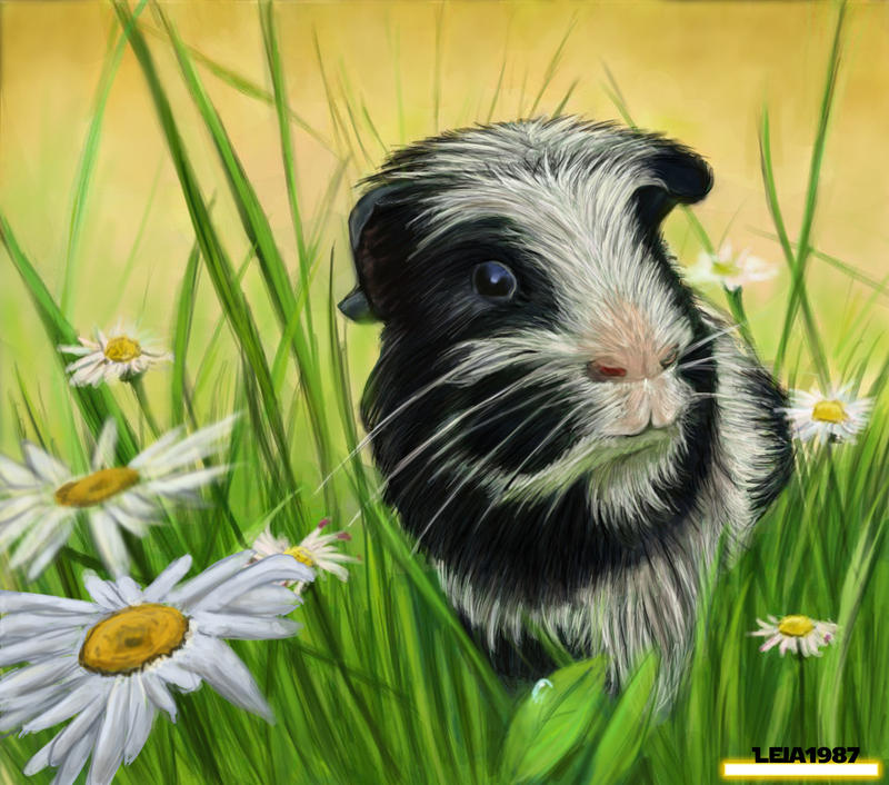 [Image: commission___dalmation_guinea_pig_by_lei...5h5b05.jpg]