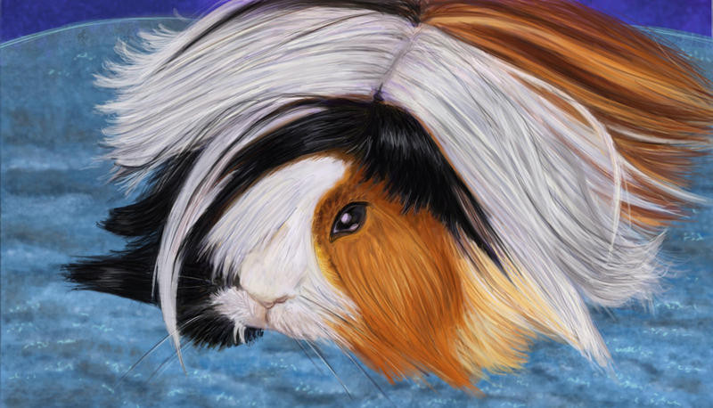 Guinea pig Commission by Leia1987