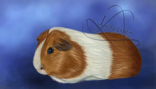 [Image: guinea_pig___red_dutch_commission_by_lei...5rn7py.jpg]