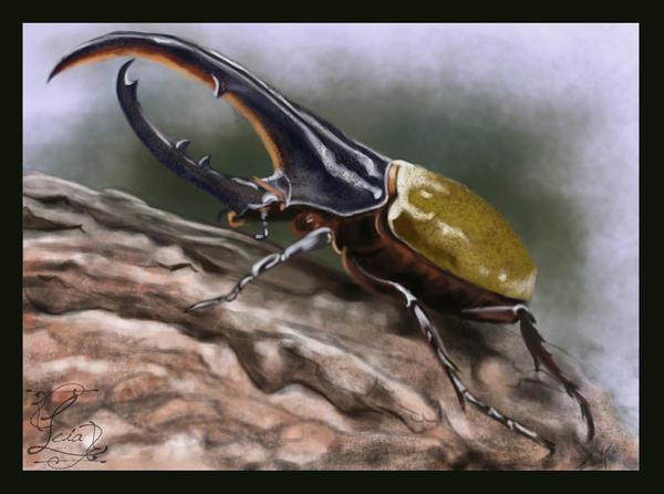 Hercules beetle - study by Leia1987
