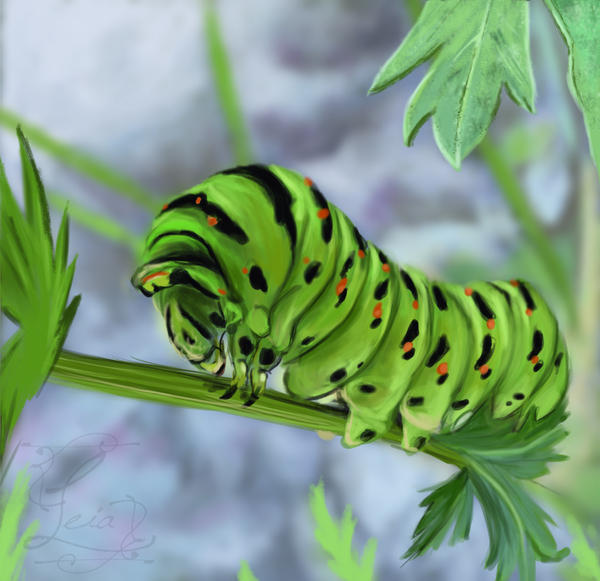 Caterpillar study by Leia1987