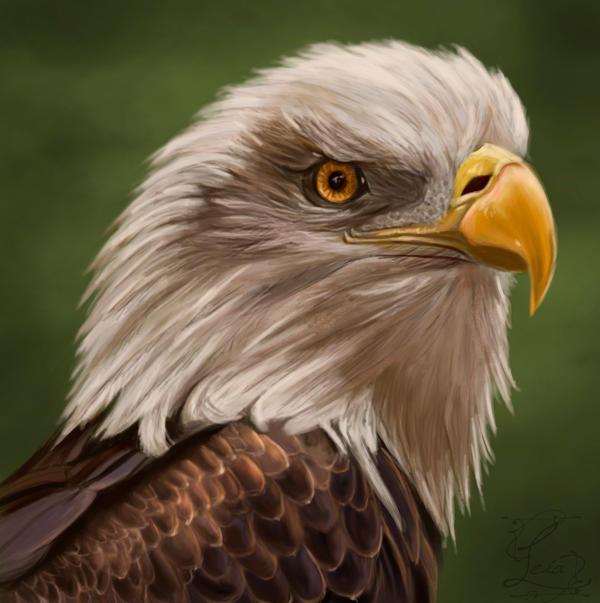 Eagle study by Leia1987