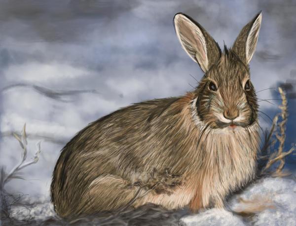 Rabbit study by Leia1987