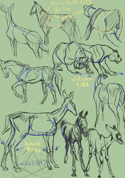 Animal Anatomy study by Leia1987