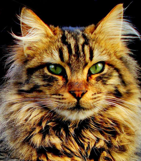 Cat boy. by Asligg