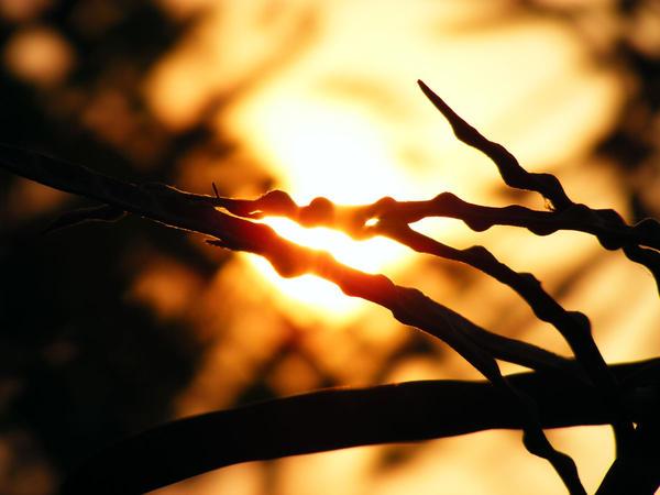 sun study 21 by farazkhwaja