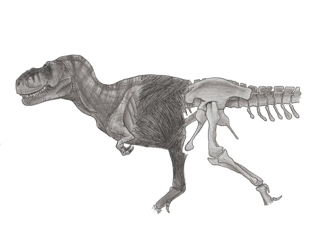 Jurassic Park Tyrannosaurus Anatomy by LythroA on DeviantArt