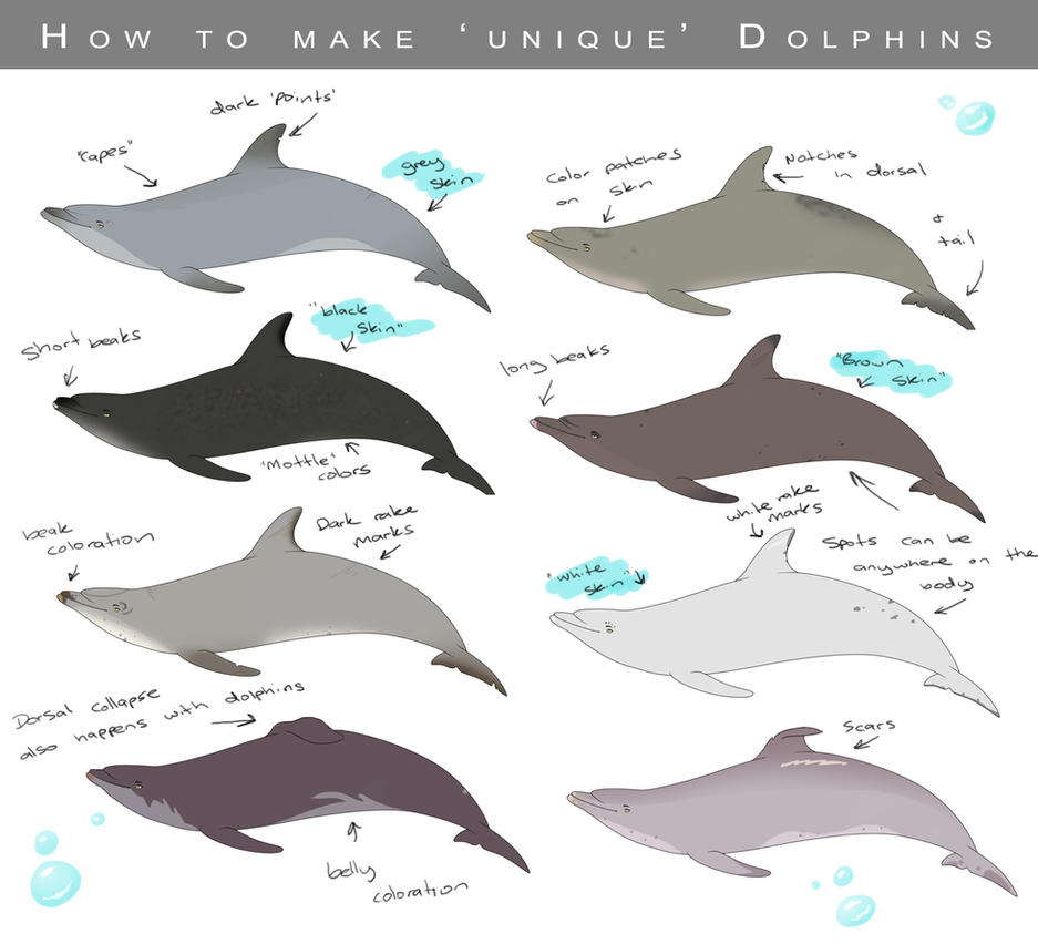how to make a dolphin