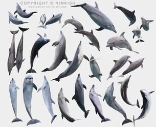 Dolphin Pose Set by Nimkish