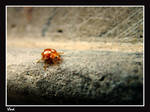 A bug's life... by vladxc