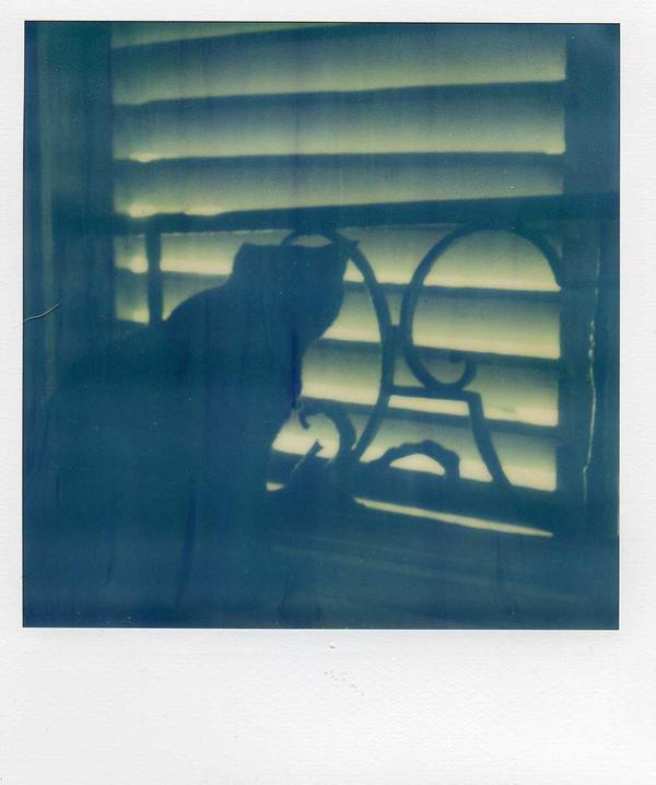 Silhouette feline by MySweetDarkness