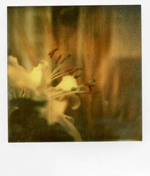 Lys by MySweetDarkness