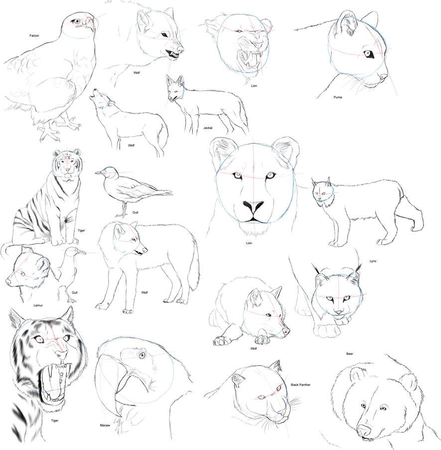 Realistic Animal Anatomy 1 by dark-reign