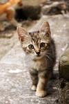 Intriguet cat