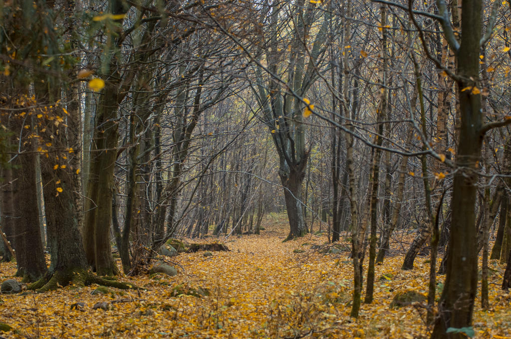 autumn stock BG by VXLPhotography