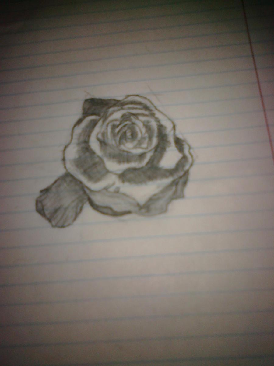ROSE by skinnivoid