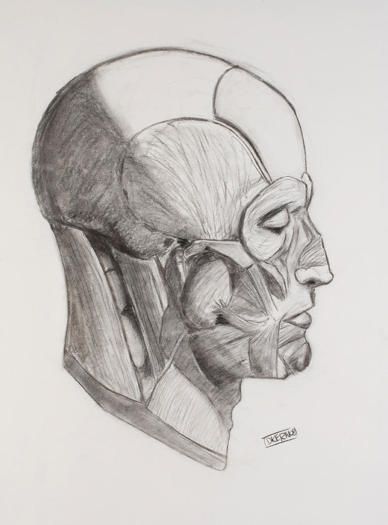 Side Face Line Drawing : Face drawing side view by deadbraintissue on deviantart