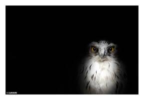 Owl by GiazBmx
