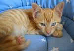 Ginger Ninja by kickass-peanut