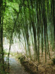 Bamboo Trail Stock