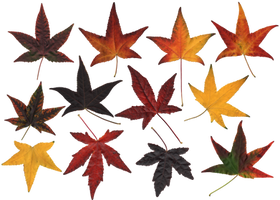 Atumn Leaves.PNG... by the-night-bird