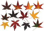 Atumn Leaves.PNG...