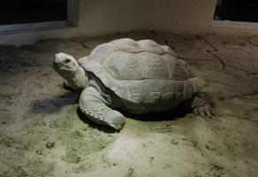 Turtle 01... by the-night-bird