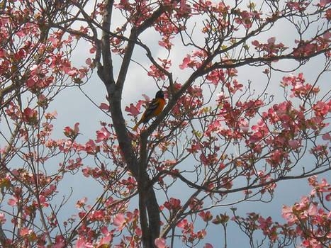Pretty Bird in Flowery Tree