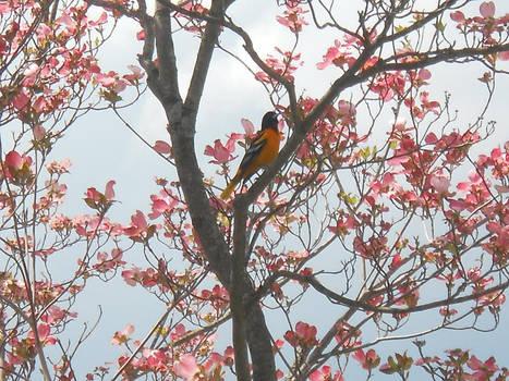 Pretty Bird in Flower Tree