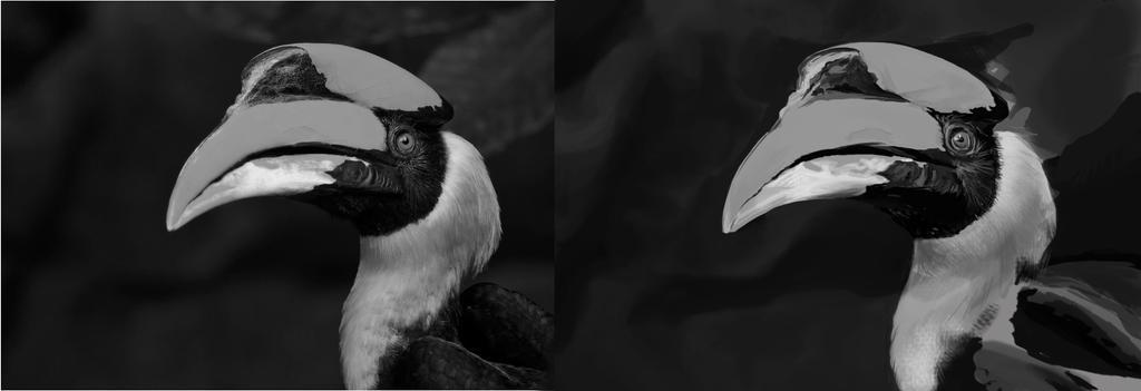 Hornbill Study by wachileirinpei