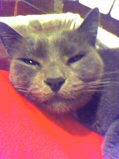 asleep by Rouchi