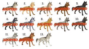 Special Wolf Adoptables 2