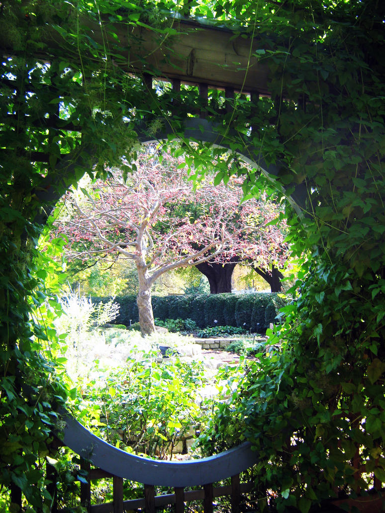 Nature's Window by Strayblackcat