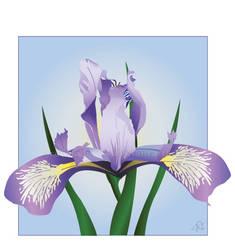 purple iris by greyskyblues