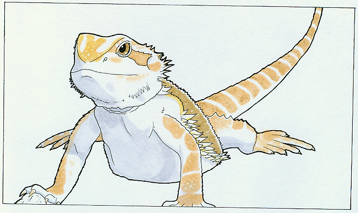 how to draw a bearded dragon lizard step by step
