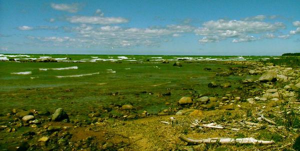 Barren Shore by Lamoni