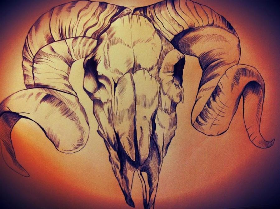 ram skull by Bethanyyes on DeviantArt