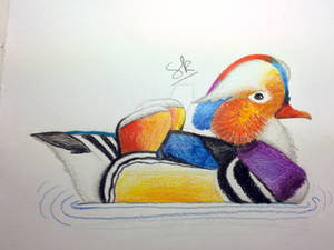Traditional Mandarin Duck Drawing- (Timelapse)