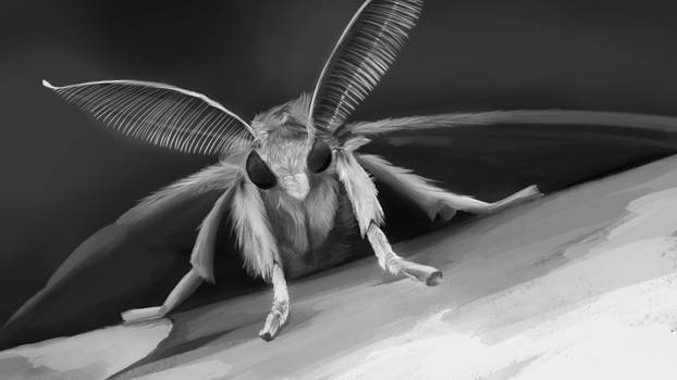 Practice Speed Painting - Gypsy Moth